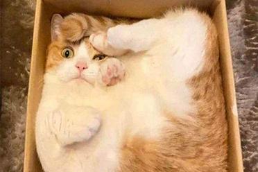 挤在盒子里有这么舒服吗?猫星人的奇妙行为大赏