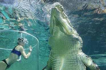 50张照片提醒大家 这些动物比你想象中的还要大得多
