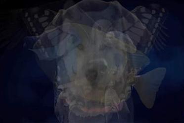 你第一眼会看到什么动物?日综心理测验测隐藏性格