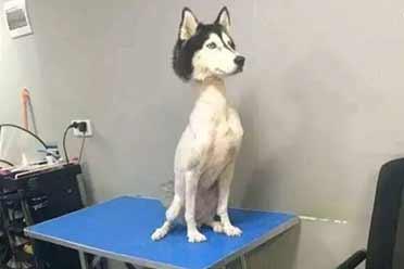 狗狗少了一半身体竟然还能站立?17张脑洞大开的照片