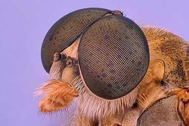 放大后的苍蝇复眼如此惊悚!显微镜下事物的神奇照片