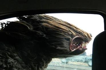 瞬间变傻!抓拍狗狗坐车兜风搞笑照片 这是什么神兽