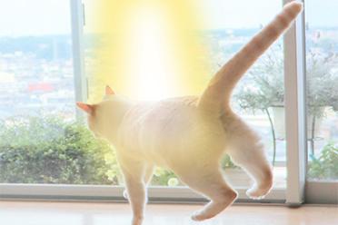 像被UFO吸走了!日本网友分享猫咪跳跃的漂浮瞬间