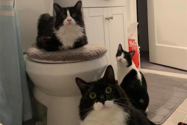 50只偷窥人类隐私的猫 人类别洗澡了!洗澡太危险了