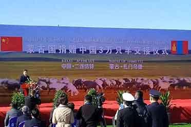 首批4000只蒙古捐赠羊已正式交付 加工后将运往湖北