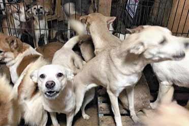 让人惊掉下巴的场面!日本一市民10平房内养164只狗
