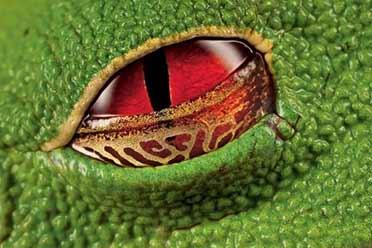 树蛙腥红的眼睛宛如《生化危机》!15张神奇的照片