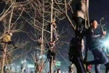 观众为了看潘长江演出爬上树 网友:实属国民顶流!
