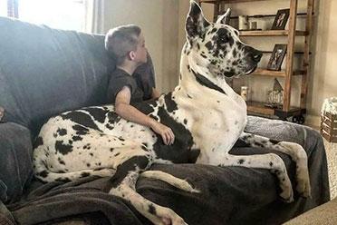 超级加倍的毛茸茸太治愈了!国外网友分享超巨大狗子