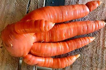 这胡萝卜竟长成了人手的形状!15张奇葩之物的照片!