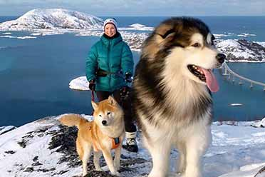 网友晒大型犬日常照:大狗小狗都在秀!只有金毛在挨揍
