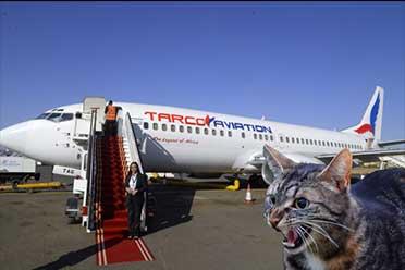 喵星人疯狂输出!波音737出发30分钟后被迫紧急返航