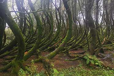 森林空间扭曲宛如《黑魂》场景!生活中神奇事物的照片