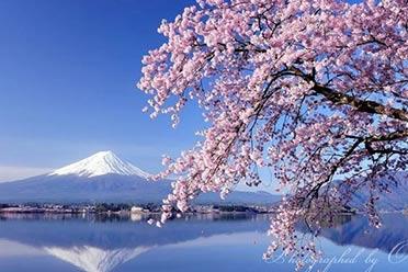 让人挪不开眼!日本富士山的四季美景 绝美风光一览
