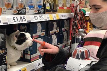 买猫粮送猫吗?喵星人总能出现在你意想不到的地方