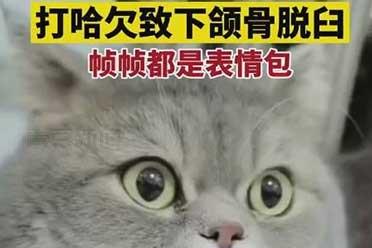 心疼又好笑!猫咪打哈欠下巴脱臼:痛苦的秒变表情包!