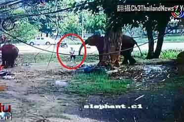 恐怖一幕曝光 泰国游客喂大象时被卷起暴摔当场身亡