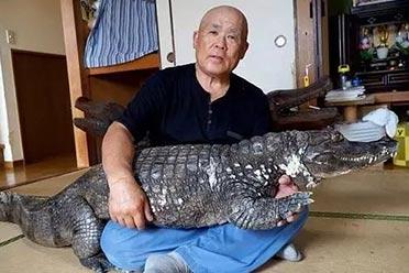 """这""""宠物""""太炫酷了!日本一老人竟把鳄鱼家养了34年"""