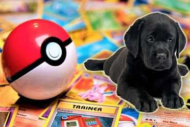 男孩出售宝可梦卡牌筹款治狗:游戏公司给他寄去稀有卡!
