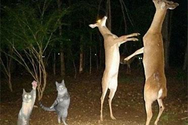 胖友 跳舞吗?国外网友分享动物的怪异 沙雕行为