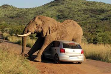 被发情的大象一顿猛蹭!网友们的倒霉瞬间看完我笑了