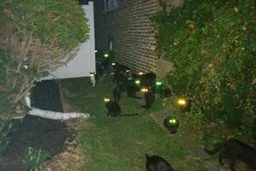 大型猫妖聚会现场?差点被自己的宠物吓到心脏麻痹!