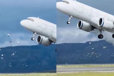 海鸥被吸入挪威客机瞬间蒸发!只剩一阵烟和羽毛