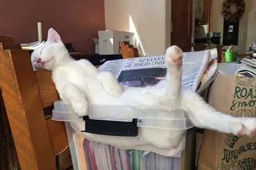 网友分享奇葩猫咪睡姿图:睡觉门槛都这么高了吗?