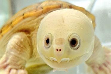 """居然有""""人脸龟""""?日本网友分享戏超多的乌龟沙雕照"""