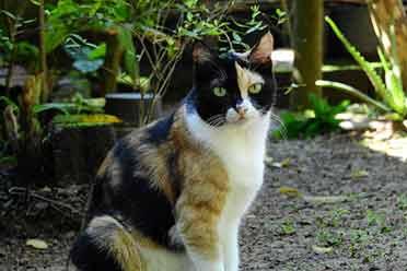 猫咪基因组排序与人类相似!或成为遗传学模型生物!