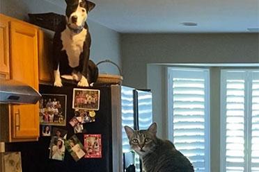 """狗和猫相处久了就会同化!逐渐""""猫化""""的狗狗沙雕图"""