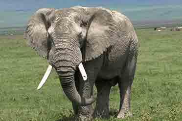 进化正在进行时!动物或因自然气候变暖而