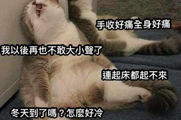超像打完AZ的你!疯传拥有疫苗副作用手的猫有够可爱!