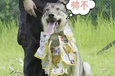 警犬也过中秋节!因表现优异 应网友要求奖励6个大鸡腿