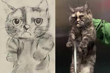 意外捡到猫!简笔画找主人:以为在搞笑结果惊呆了!