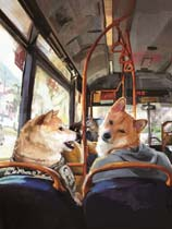 《与柴犬共度夏天》免安装绿色版