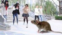 用遥控老鼠吓坏南京大学妹子!(原创恶作剧)