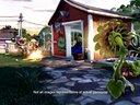 《植物大战僵尸:花园战争》植物讲解