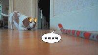 狗雄救美大战玩具蛇  53