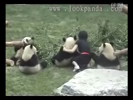 (熊猫)不好,胖达耍流氓啦!
