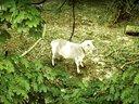 【游侠网】《模拟山羊》预告