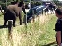 1分17秒高能!逃跑的大象发怒了