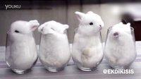 老板,给我来一杯小白兔