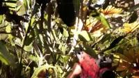 《孤岛惊魂5》全流程视频攻略合辑14