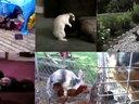 【游侠视频站】当动物们做同一件事,太逗了!