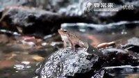 【峻晨解说】新物种!魔鬼蛙、驯服乘骑指南!沼泽区分布,有眩晕效果~自带大跳技能呱
