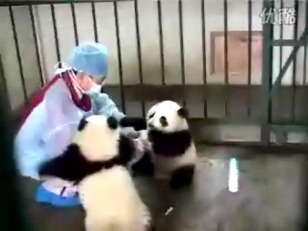 (熊猫)吃货是从小养成的