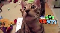 【萌星人de那些破事18】别作死,好奇害死猫!