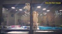 一家宠物店内 猫猫费尽气力翻到隔壁与狗狗相会