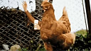 【笑料百出精选】动物竟进化为拥有双手的生